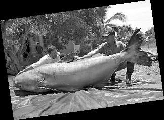 世界最的鲶鱼