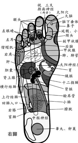 肾在脚底哪个部位图解