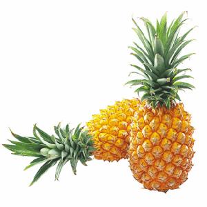 一般存放久了的菠萝底部会出现水痕