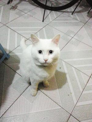 招募令      《邢周报》宠物版有逗趣的宠物故事,可爱的宠物照片秀